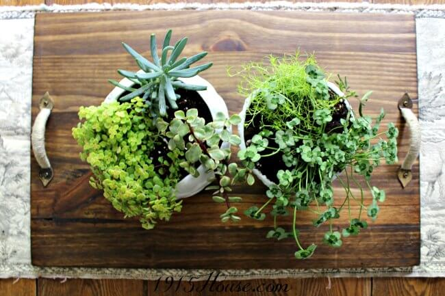 Quick and easy thrift store DIY makes for beautiful home accents | DIY | Planter | succulents | upcycle