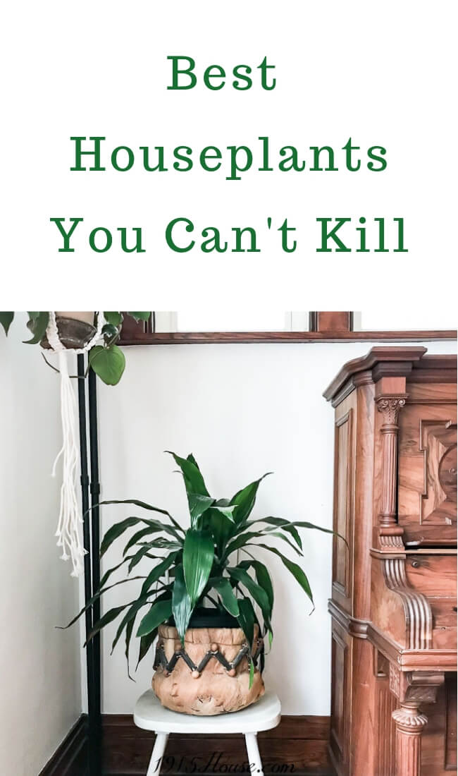 Hands down, the best houseplants you can't kill - these thrive on neglect!