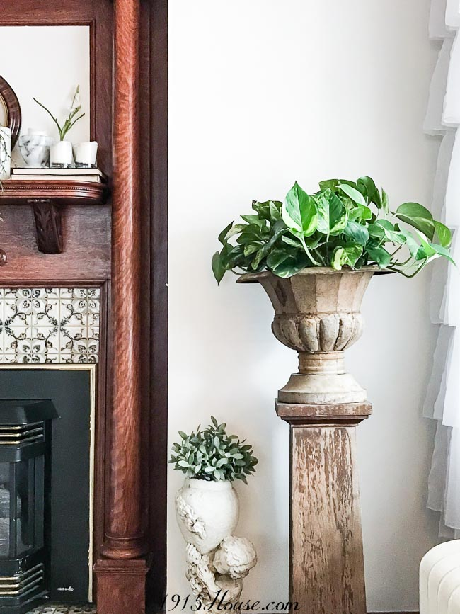 Houseplants you can't kill - these thrive on neglect!