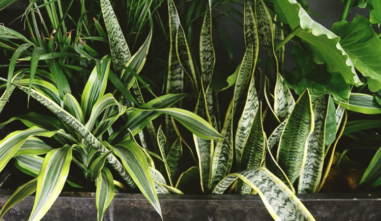 Best Houseplants You Can't Kill